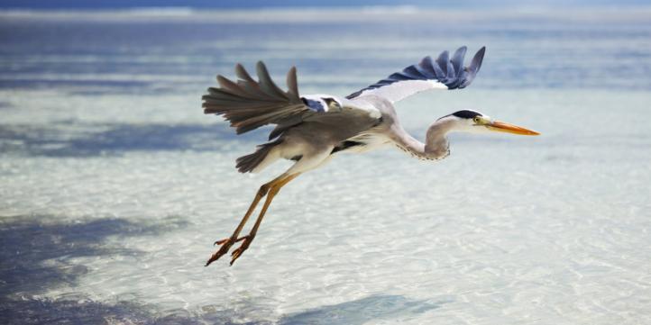 Chilka Lake Bird Sanctuary – Live More Zone