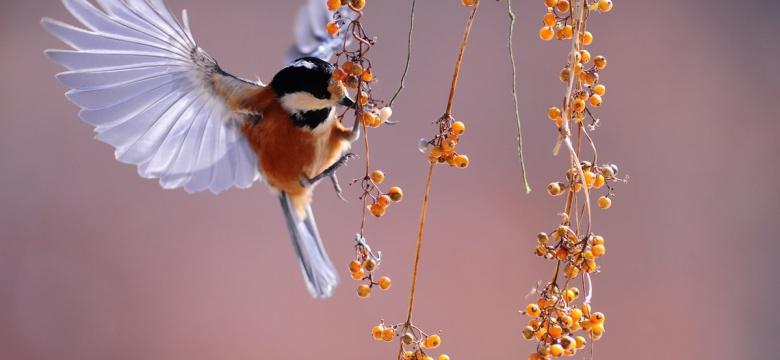 Beautiful Bird Sanctuaries In India For Bird Watching