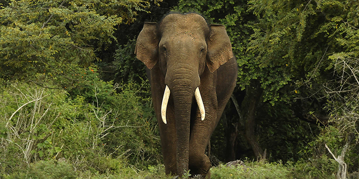Kaav Safari - Live More Zone