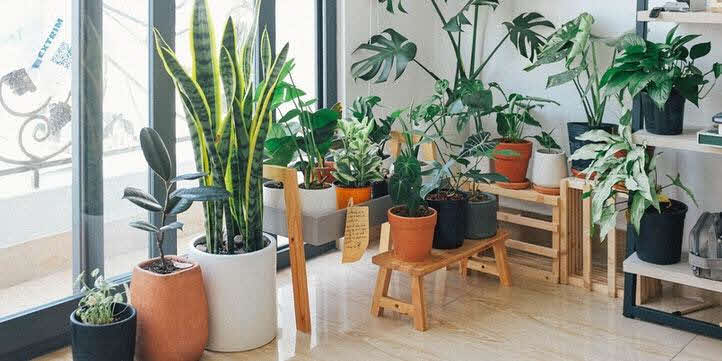Add-Plant-life-Home-redecoration-guide-live-more-zone-DBS