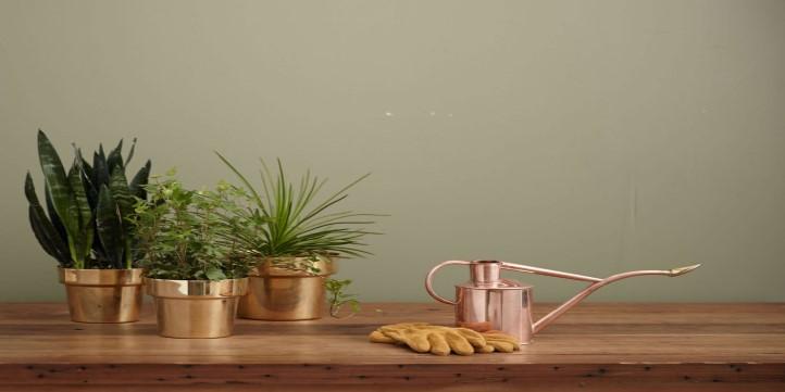 Add Some Plants - Live More Zone
