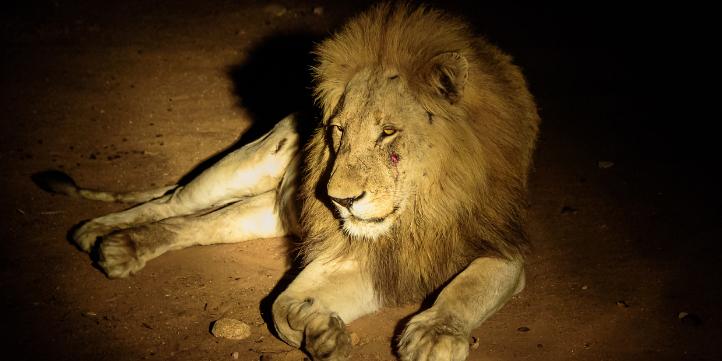 Amazon Forest Night Safari   – Live More Zone