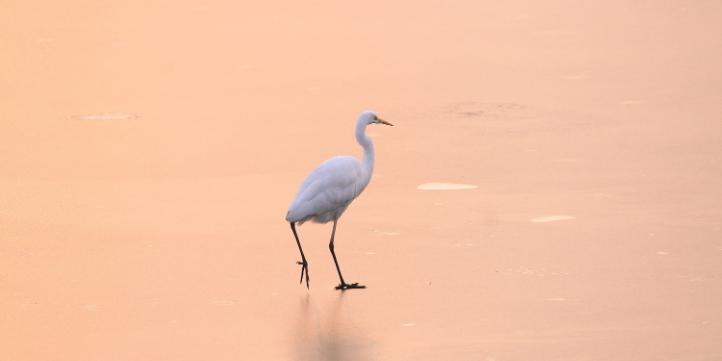 Anshi National Park  – Live More Zone