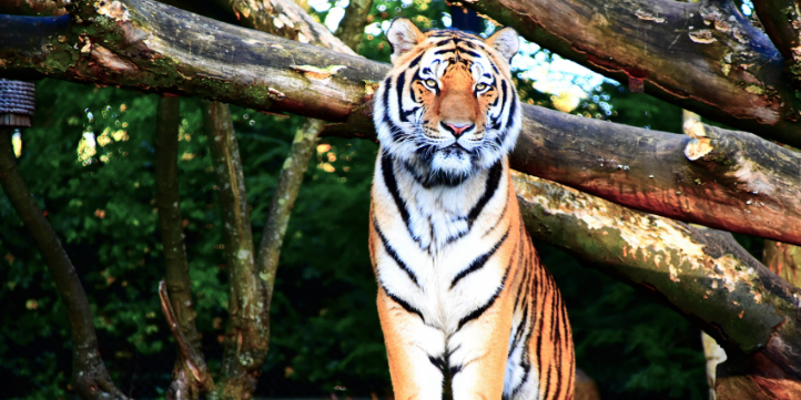 Bandipur Tiger Reserve and National Park  – Live More Zone