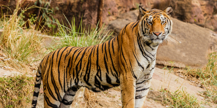 Bannerghatta National Park – Live More Zone