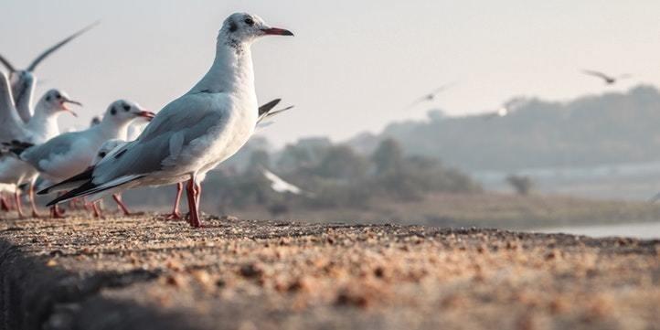 Birding at Mulshi- Live More Zone