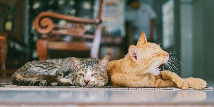 Cat Café Studio - Live More Zone