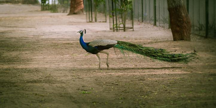 Chhilchhila Wildlife Sanctuary – Live More Zone