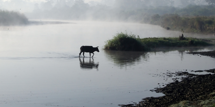 Chitwan National Park  – Live More Zone
