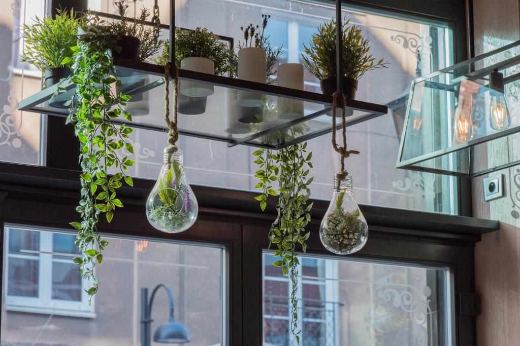 Choosing the indoor plants