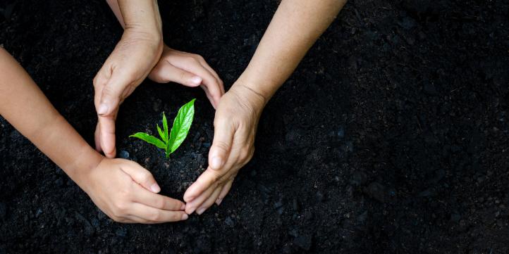 Plant more – Live More Zone