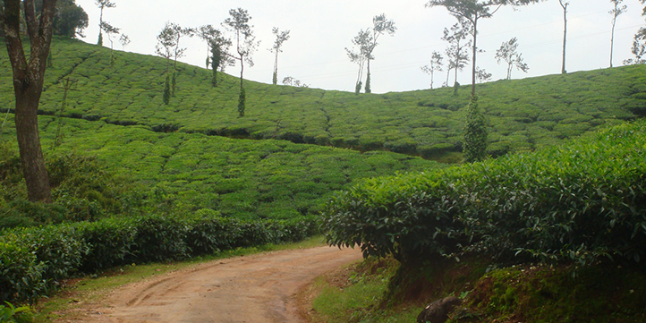 Coorg - Live More Zone
