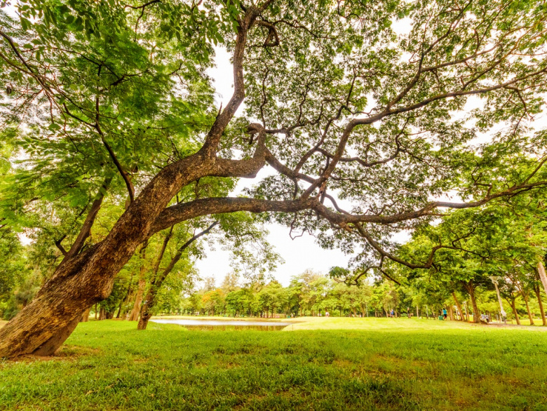 Walk, Run Or Chill: 5 Of Delhi's Most Beautiful Parks