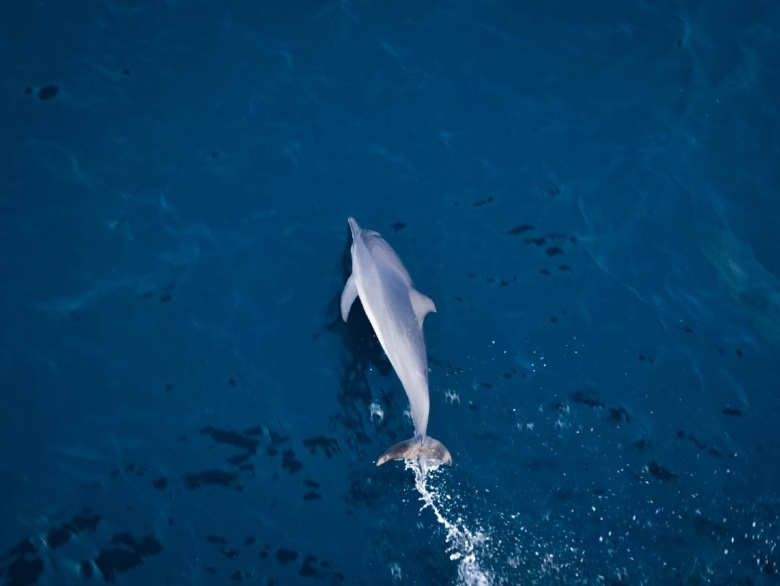 Stunning Places To Spot Dolphins In India