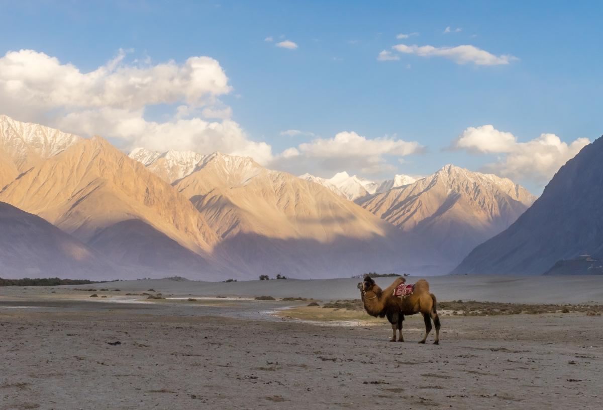 Best Places To Visit In Leh Ladakh