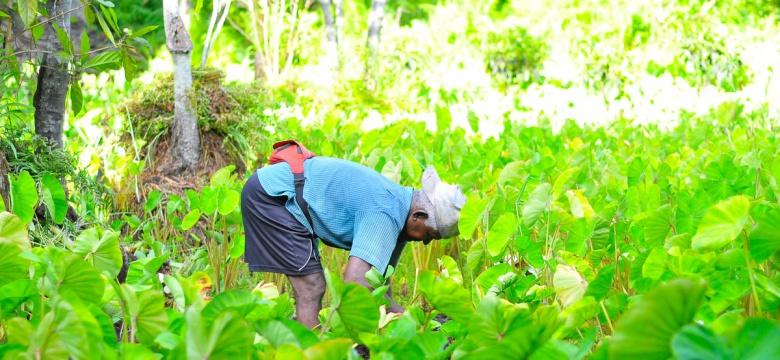 7 Environmental Benefits Of Organic Farming