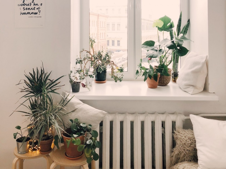 5 Low-Maintenance Indoor Plants To Get For Your Home