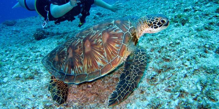 Fiji, Oceania - Live More Zone