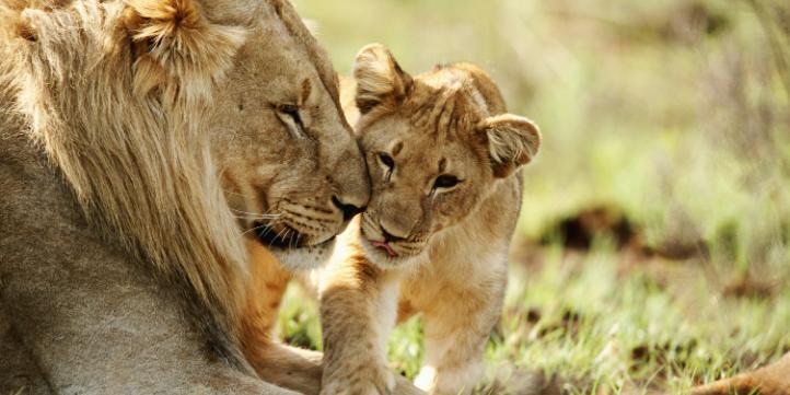 Gir National Park – Live More Zone