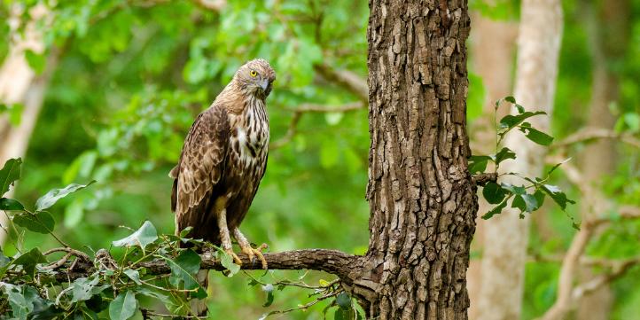 Gorewada National Park  – Live More Zone