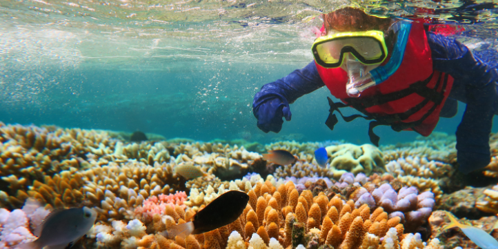 Great Barrier Reef  – Live More Zone