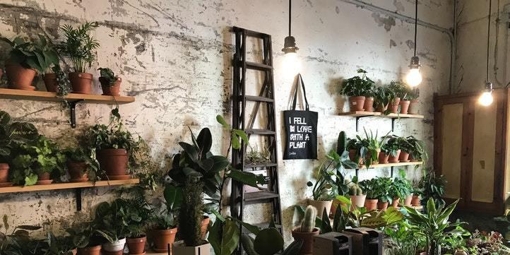 Gardener for plants