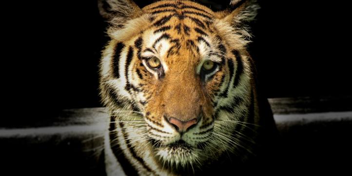 Kanha Night Safari   – Live More Zone