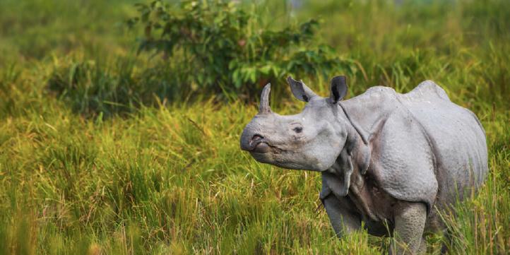 Kaziranga National Park – Live More Zone