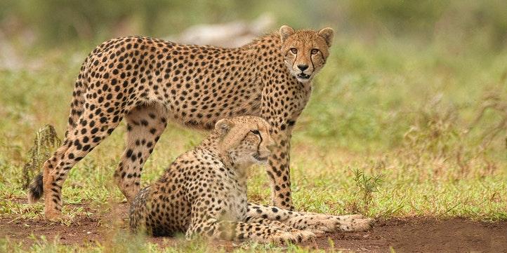 Masai Mara - Live More Zone