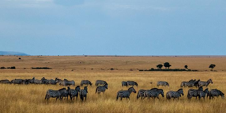 Kenya - Live More Zone