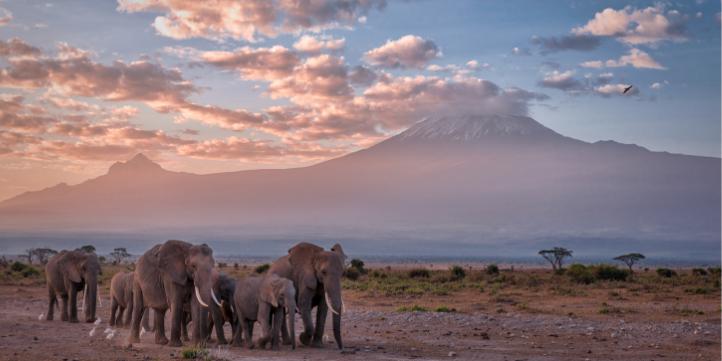 Kilimanjaro – Live More Zone