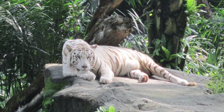 Singapore Zoo – Live More Zone