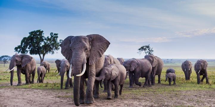 Manas National Park – Live More Zone
