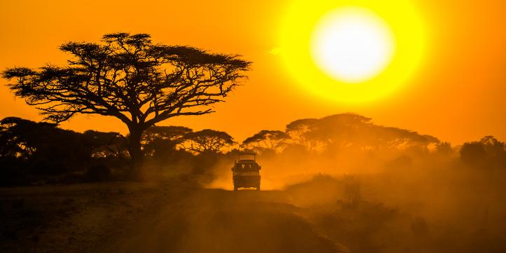 Tanzania Night Safari  – Live More Zone