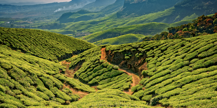 Munnar – Live More Zone