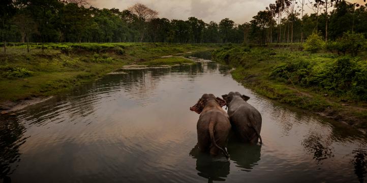 Nameri National Park – Live More Zone