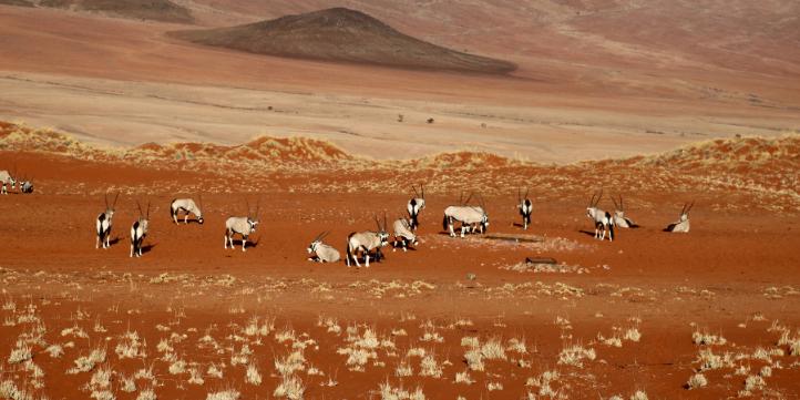Namib Desert  – Live More Zone