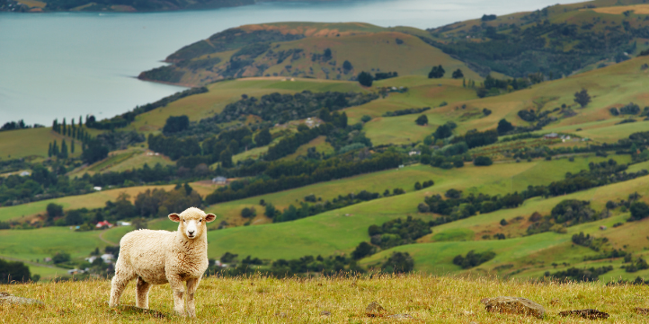 New Zealand  – Live More Zone