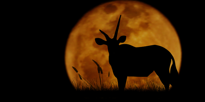 Night Safari in Africa  – Live More Zone