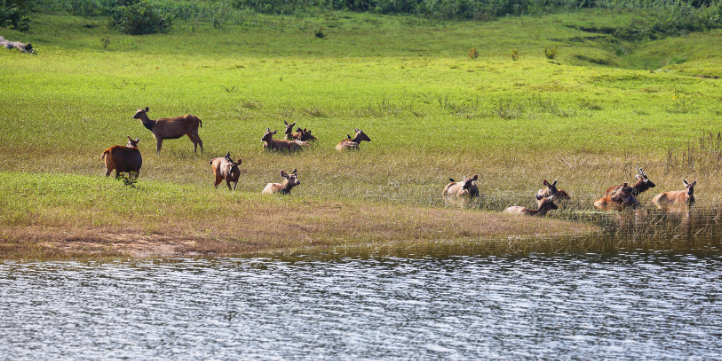 Periyar National Park – Live More Zone