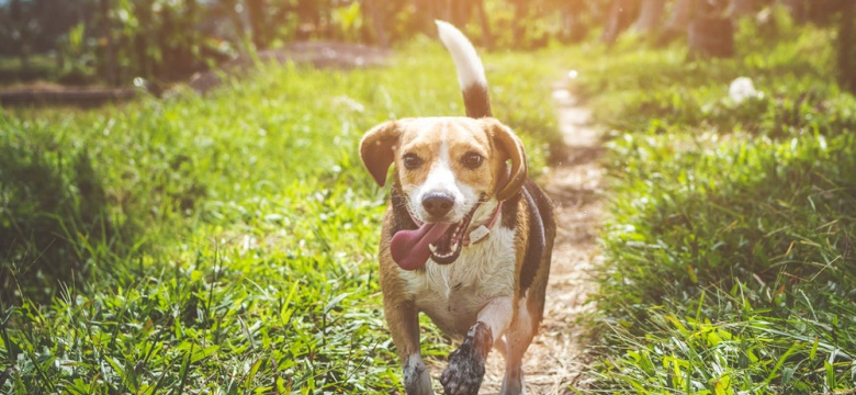 Take Home A Furry Friend At These Adoption Centers