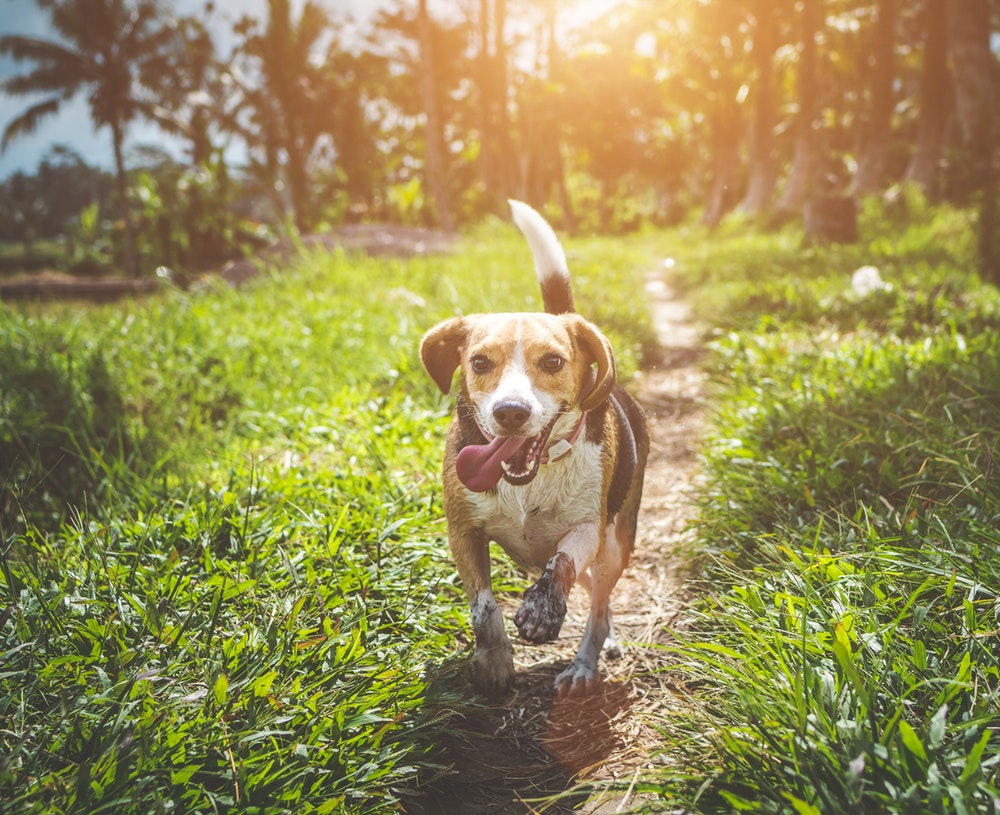 Take-Home A Furry Friend At These Pet Adoption Centers In Mumbai