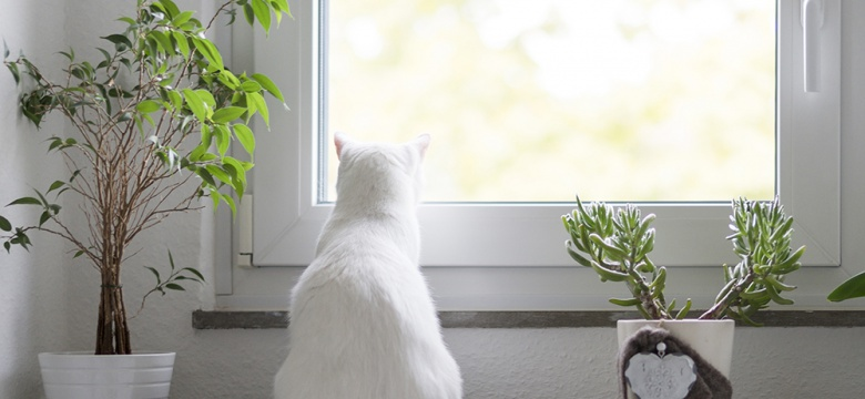 8 Houseplants That Are Safe For Your Pets