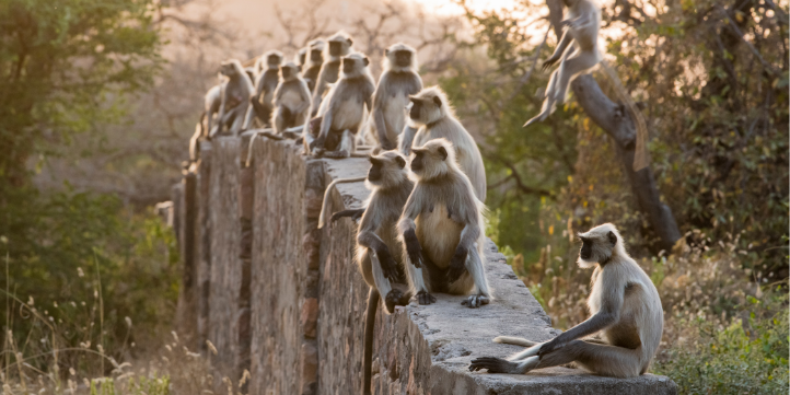 Ranthambore National Park – Live More Zone