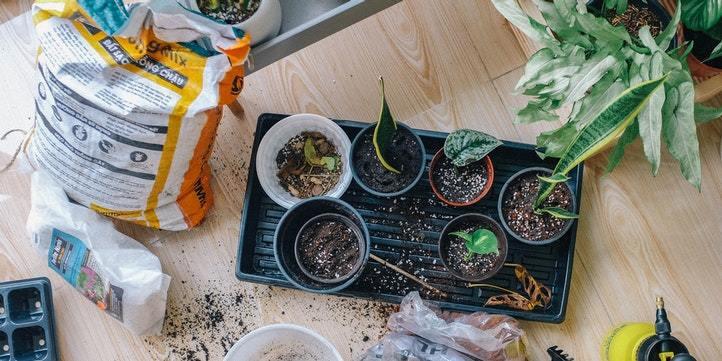 Repot the plants