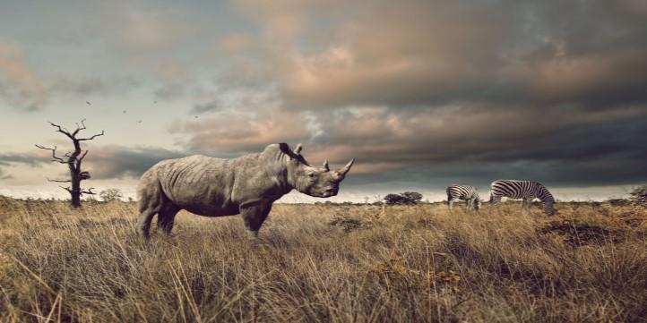 Rhino conservation of India