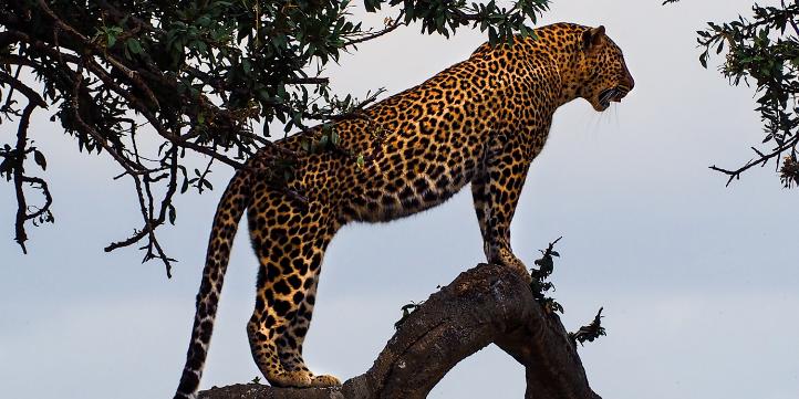 Sariska Tiger Reserve  – Live More Zone