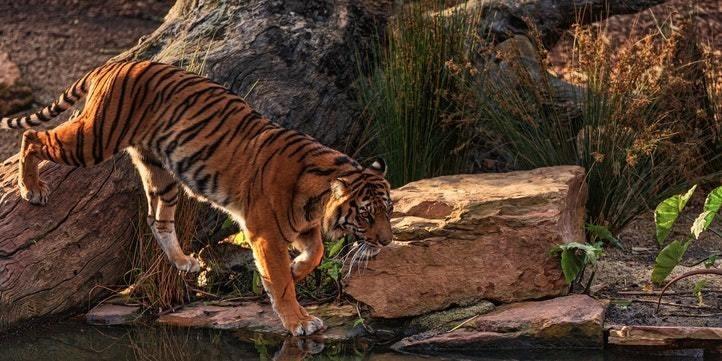 Sundarbans Tiger Reserve - Live More Zone
