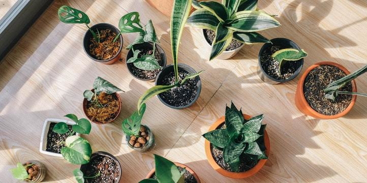 9 Tips To Help You {Start And} Keep Your Indoor Plants Alive