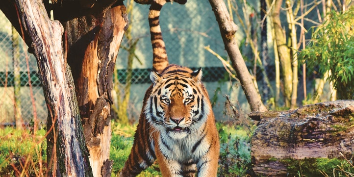 Tadoba Andhari Tiger Reserve - Live More Zone